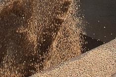 Россельхознадзор должен ужесточить контроль качества зерна