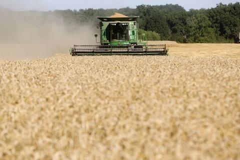 Кубань собрала рекордный урожай зерна