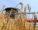 Костромская область увеличила сбор зерновых