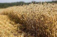 В октябре агросектор вырос на 11,9%