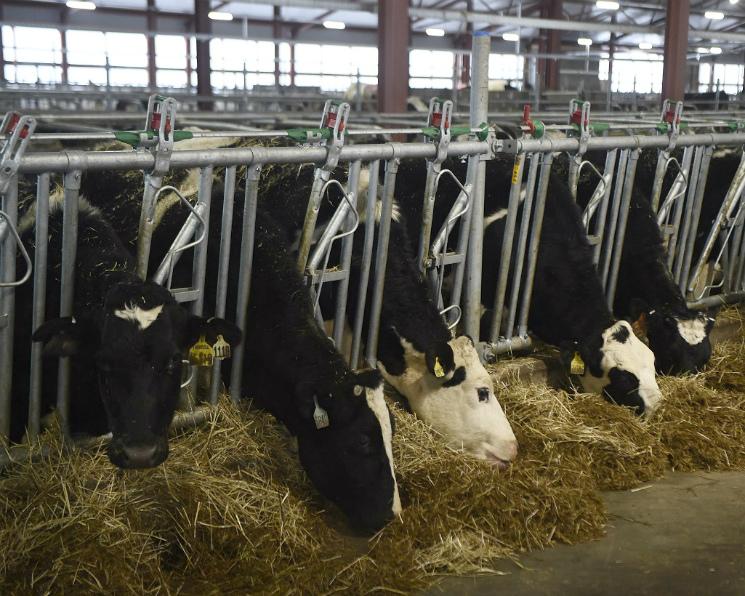 THTrue Milk открыл первую ферму вМосковской области
