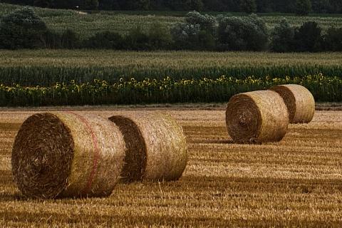 «Агропромкомплектация» намерена купить 60 тысяч гектаров в Рязанской области