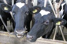Минсельхоз ждет роста производства молока на500 тысяч тонн