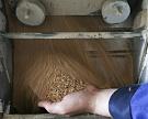 Запасы пшеницы остаются рекордными