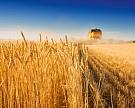 Урожай зерновых – снова трехзначный
