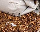 Урожай гречихи идет на новый рекорд