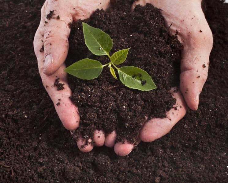 Без почвы под ногами. Деградация земель лишает аграриев прибыли