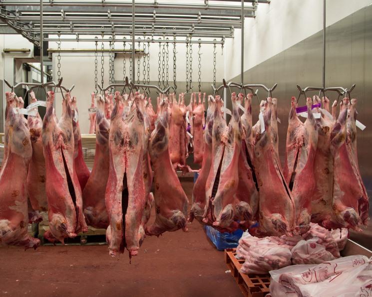«Ставропольский фермер» разделает баранину. Компания инвестирует в завод по убою и выращиванию овец 3,2 млрд рублей
