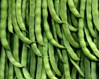 Урожай бобовых может быть выше без удобрений