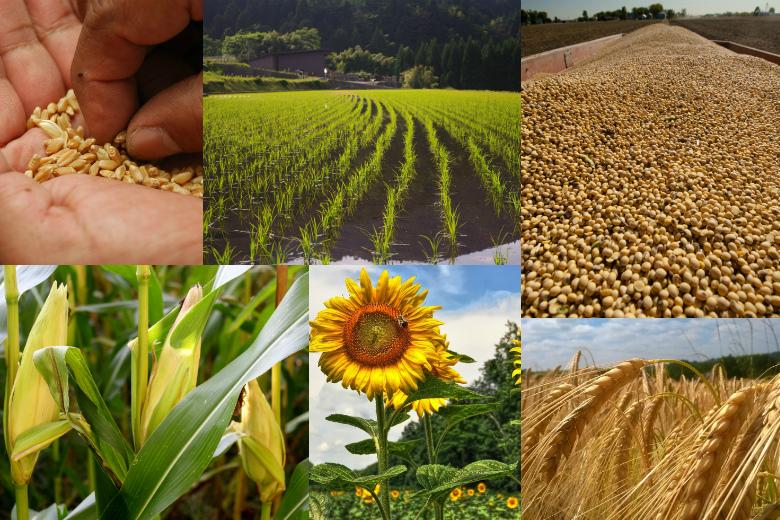 Однажды вАмерике: как США оценивают урожай 2016 года