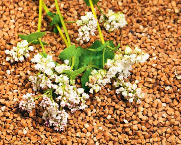 Доход сминоритариев: нанеосновных зерновых можно хорошо заработать