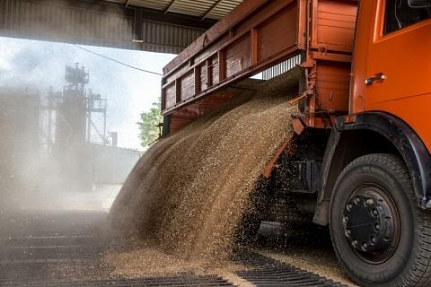 Российская пшеница дешевеет на фоне новостей о рекордном урожае