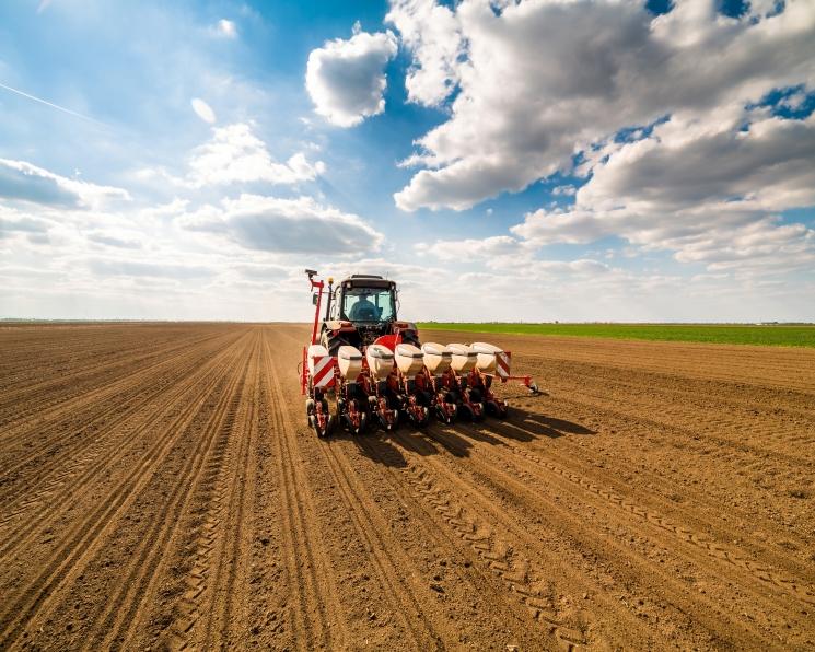 Что посеем. Общая посевная площадь в 2020 году составит около 80,3 млн гектаров