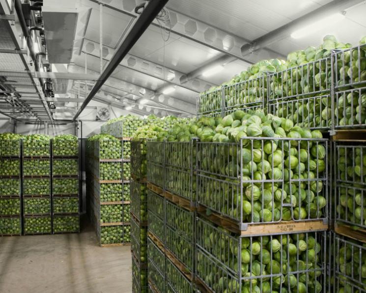 Лишь 30% овощей открытого грунта закладывается нахранение