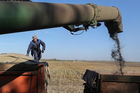 Масложировой союз предложил временно запретить экспорт подсолнечника