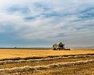 Минсельхоз понизил прогноз урожая зерна до100−105 млн тонн