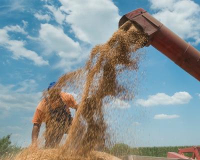 Пшеничный провал: потенциал зернового направления под вопросом