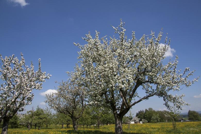 В Дагестане 2015 год был объявлен «Годом садоводства»