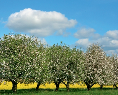 Инвестиции навырост: агрохолдинги ищут ниши для диверсификации бизнеса