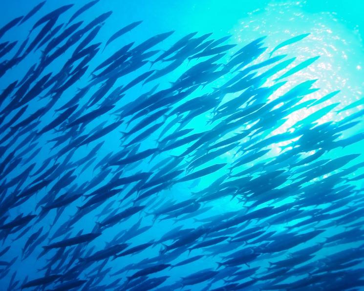 Рыбная интеграция. Ученые разрабатывают систему совместного выращивания рыбы и растений