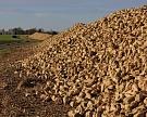 Сергачский сахарный завод увеличит переработку до 350 тысяч тонн сырья