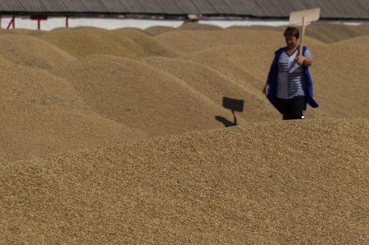 Доля продовольственного зерна снижается
