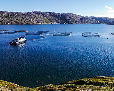 Рыбной отрасли нужно $3,5 млрд инвестиций
