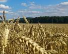 Минсельхоз США вновь повысил прогноз по урожаю зерновых в России до 114,5 млн тонн