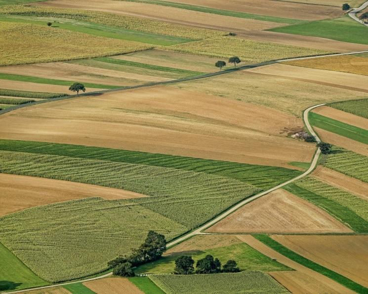 Деньги уходят в землю. Как меняется российский рынок сельхозземель
