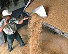 С начала сезона экспортировано почти 15 млн тонн зерна