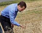 Урожайность зерновых увеличилась к прошлому году