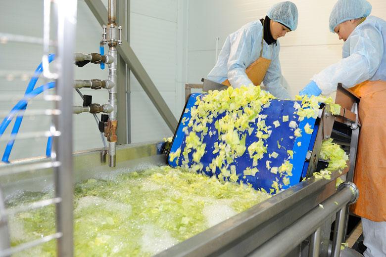 Салатное производство «Белой Дачи»