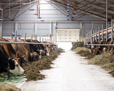 Объем сельхозпроизводства вРоссии в2013 году вырос