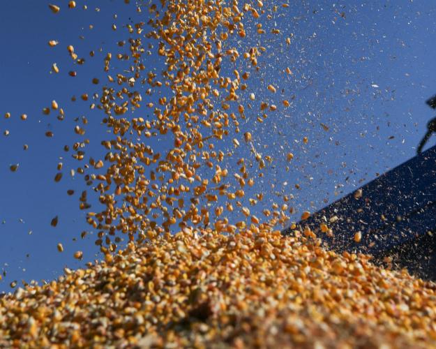 Сбор ранних зерновых вУкраинском государстве  достиг экватора