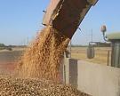 Сбор зерна превысил 100 млн тонн