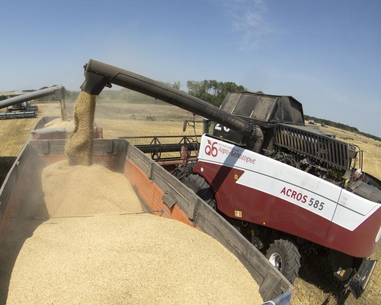 Прогнозы сбора зерна в 2019 году растут