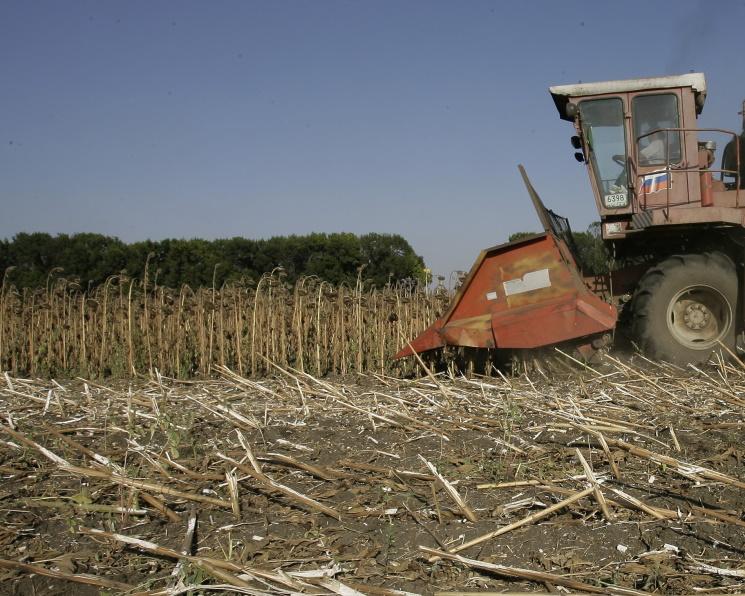 Урожайность подсолнечника на 18% выше прошлогодней