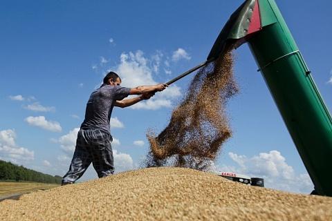 86% собранной в России пшеницы приходится на 3-й и 4-й классы