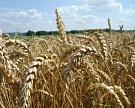 Зерно начали отгружать на экспорт?