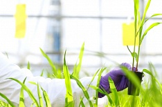 Bayer завершил поглощение Monsanto