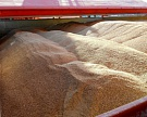Экспорт зерна с начала 2016 года превысил 6,3 млн тонн