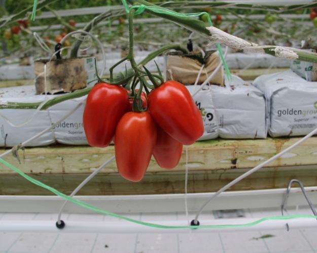 К2020 году «Эко-культура» намерена стать лидером сектора тепличных овощей вРоссии