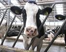 Александр Ткачев пообещал закрыть дефицит молока запять лет