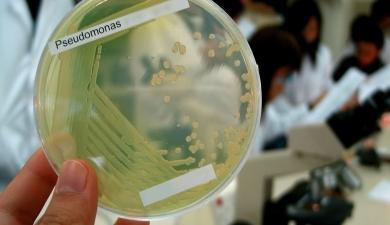 «Тимирязевка» тестирует тропические микробы