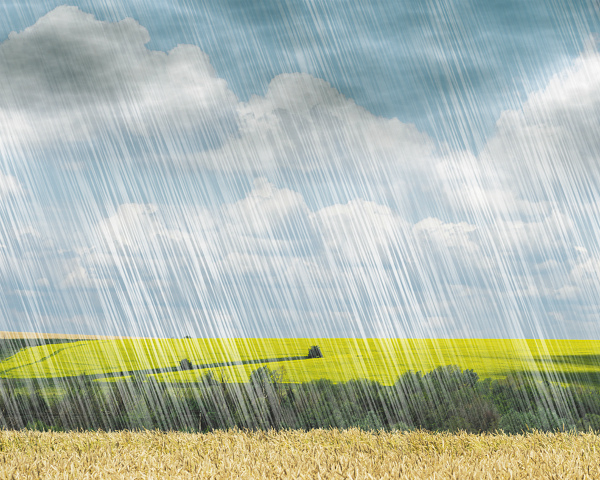 Аномальные осадки снизили качество зерна иповысили сборы сгектара