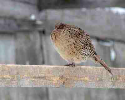 Челябинская область ввела мораторий навыдачу госгарантий из-за проблем птицеводов