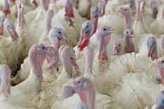 На базе «Евродона» и «Белой птицы» может быть создан экспортный кластер