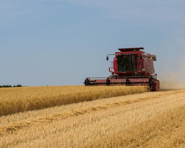В Омской области начали фиксировать гибель урожая