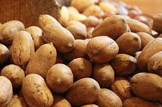 Мексика намерена увеличить экспорт ореха пекан в Россию