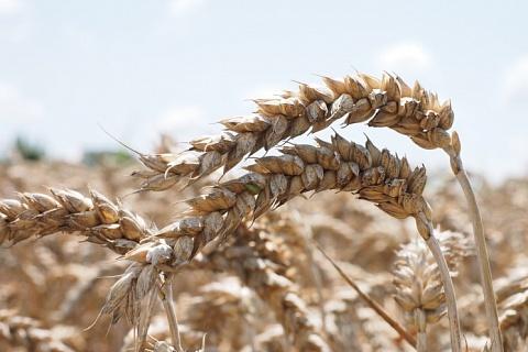 Экспорт зерна в сезоне-2018/19 составил 43,3 млн тонн